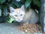 Gatito rubio busca un hogar