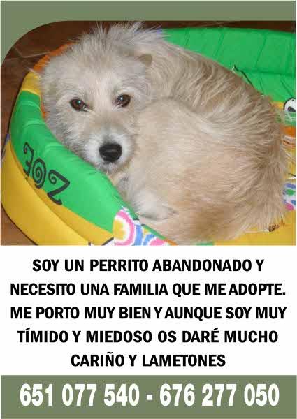 Perrito abandonado busca un hogar