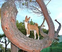 El perro en un círculo