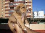 Cachorro beagle 2