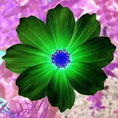 Flor verde, original en http://www.flickr.com/photos/20375052@N00/31702827