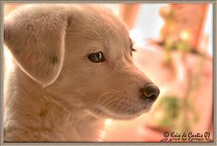 Mirada de cachorro