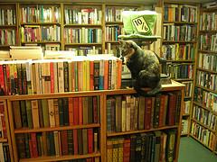 libros_gato