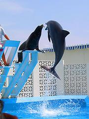 León marino compartiendo con un delfín